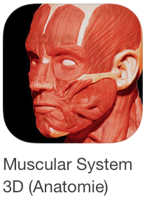 bio_muscular-system-3d